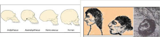 Evolution-change-of-man.jpg