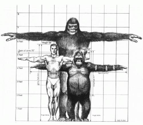 Bigfoot-size-comparison.jpg